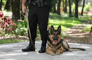 german-shepherd-police-dog-and-handler3
